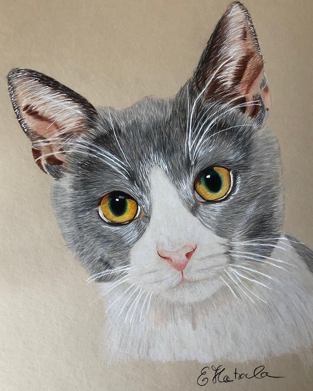 How To 45 Best Cute Animal Drawings For You 2019 Page 9 Of 47