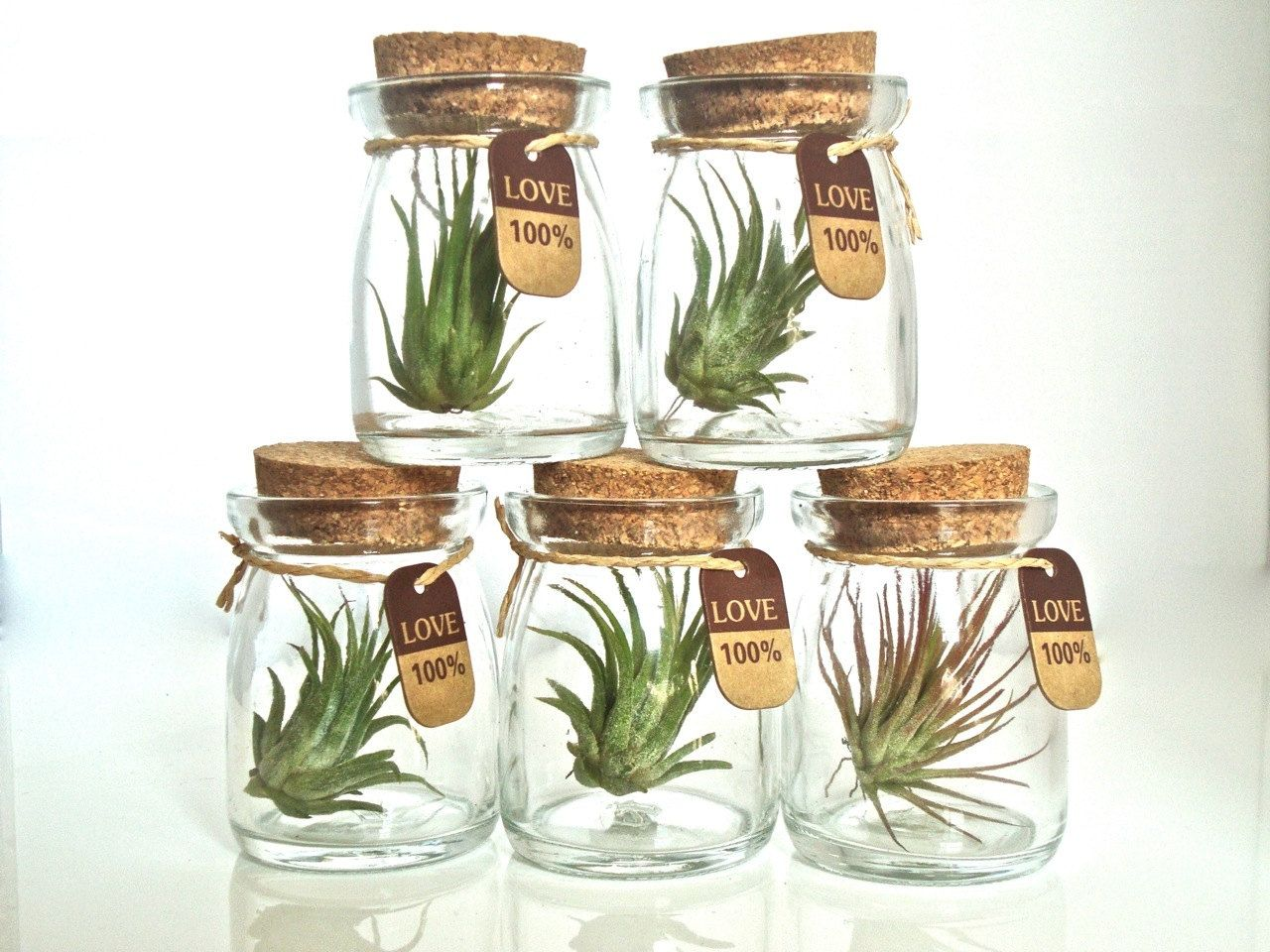 Image result for air plant retail display | Flower Power | Pinterest ...