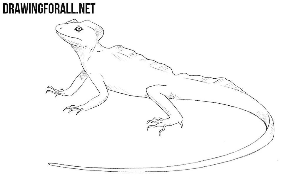 How To Draw A Basilisk Lizard Basilisk Lizard Lizard Drawings