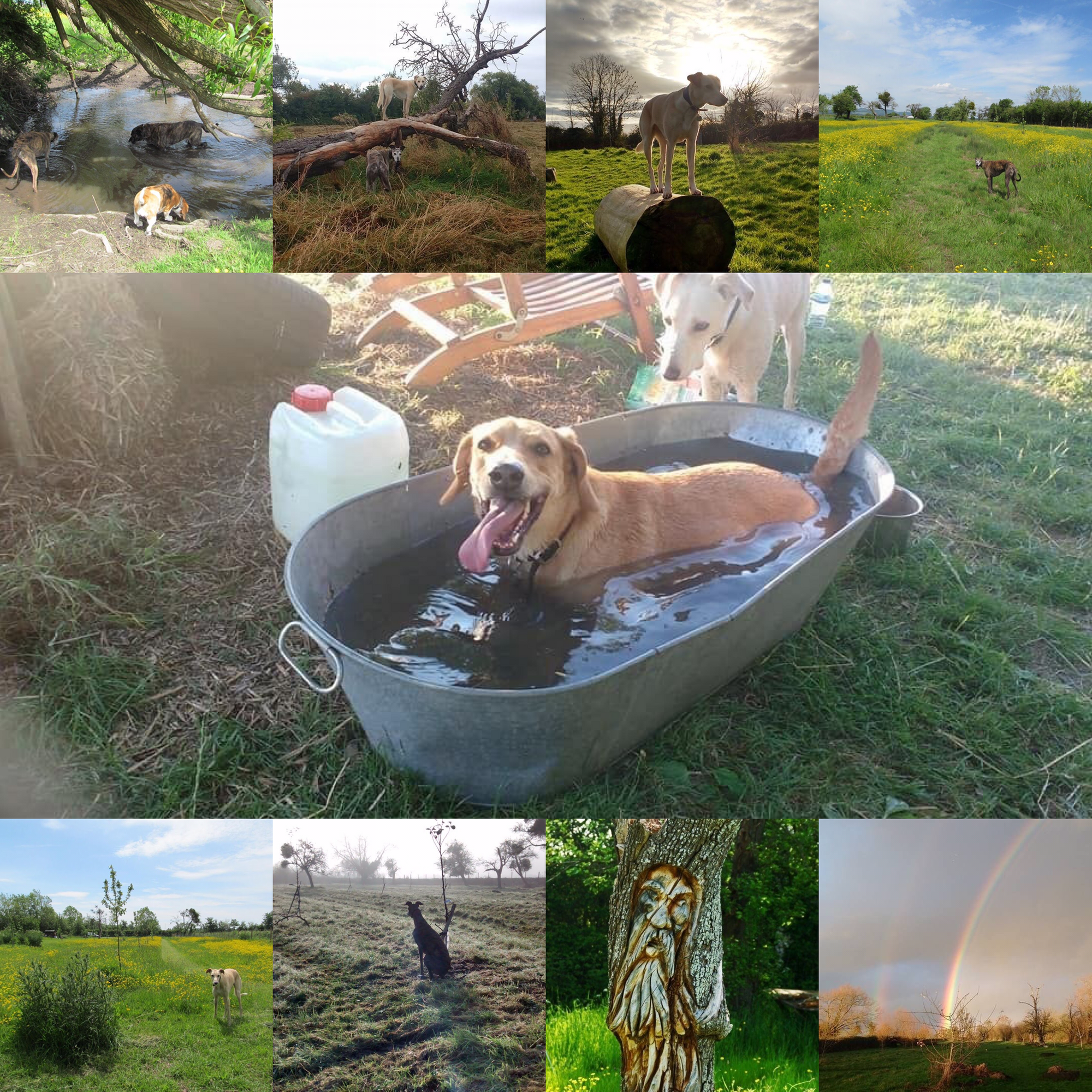 Happy Hounds Nine And A Half Acre Secure Dog Field And 3 5 Acre Orchard Off Of Passage Road Arlingham Gloucestershire G Dog Walking Dog Play Area Indoor Dog