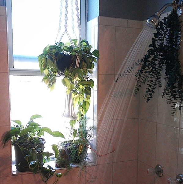 Shower plants h o m e b a t h r o o m pinterest for Dekor von zierpflanzen