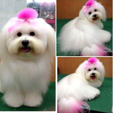"-Repinned- Pet Hair Dye. ""Highlights"". | Dog dye, Dog ..."
