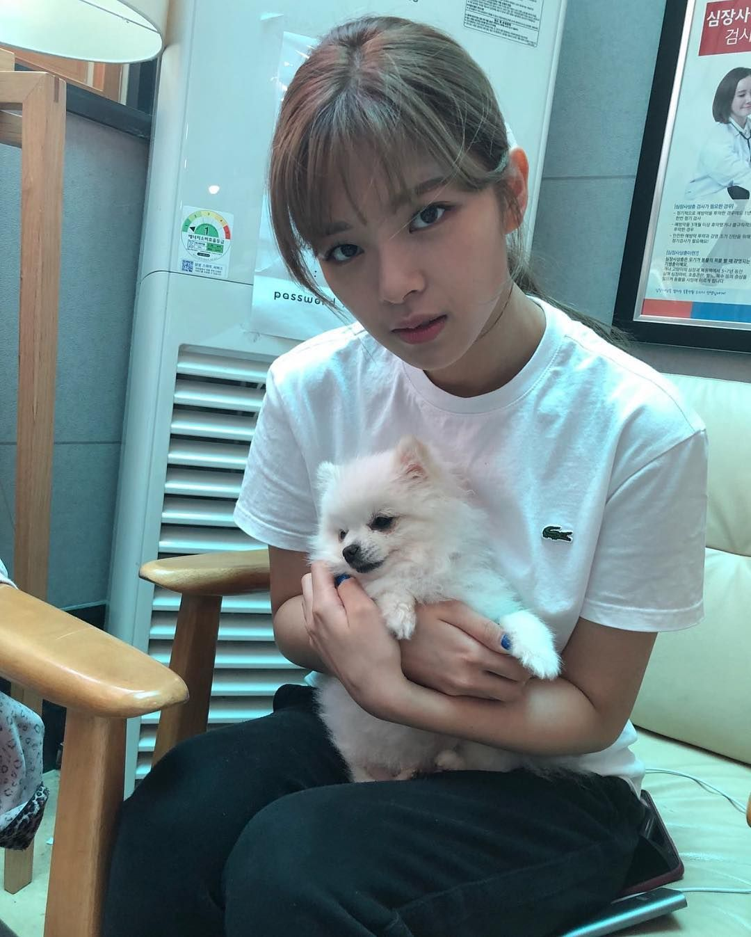 Name All The Dogs That Twice Had Twice Jungyeon Twice Nayeon