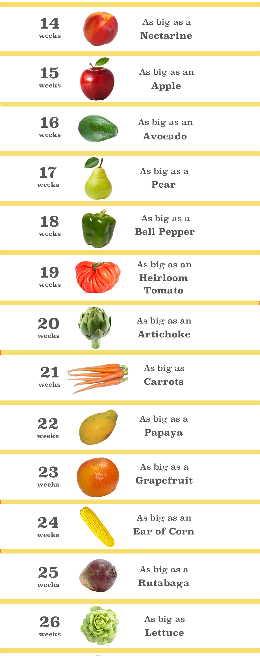 Size Of Baby At 21 Weeks Fruit : weeks, fruit, Charts, Timelines
