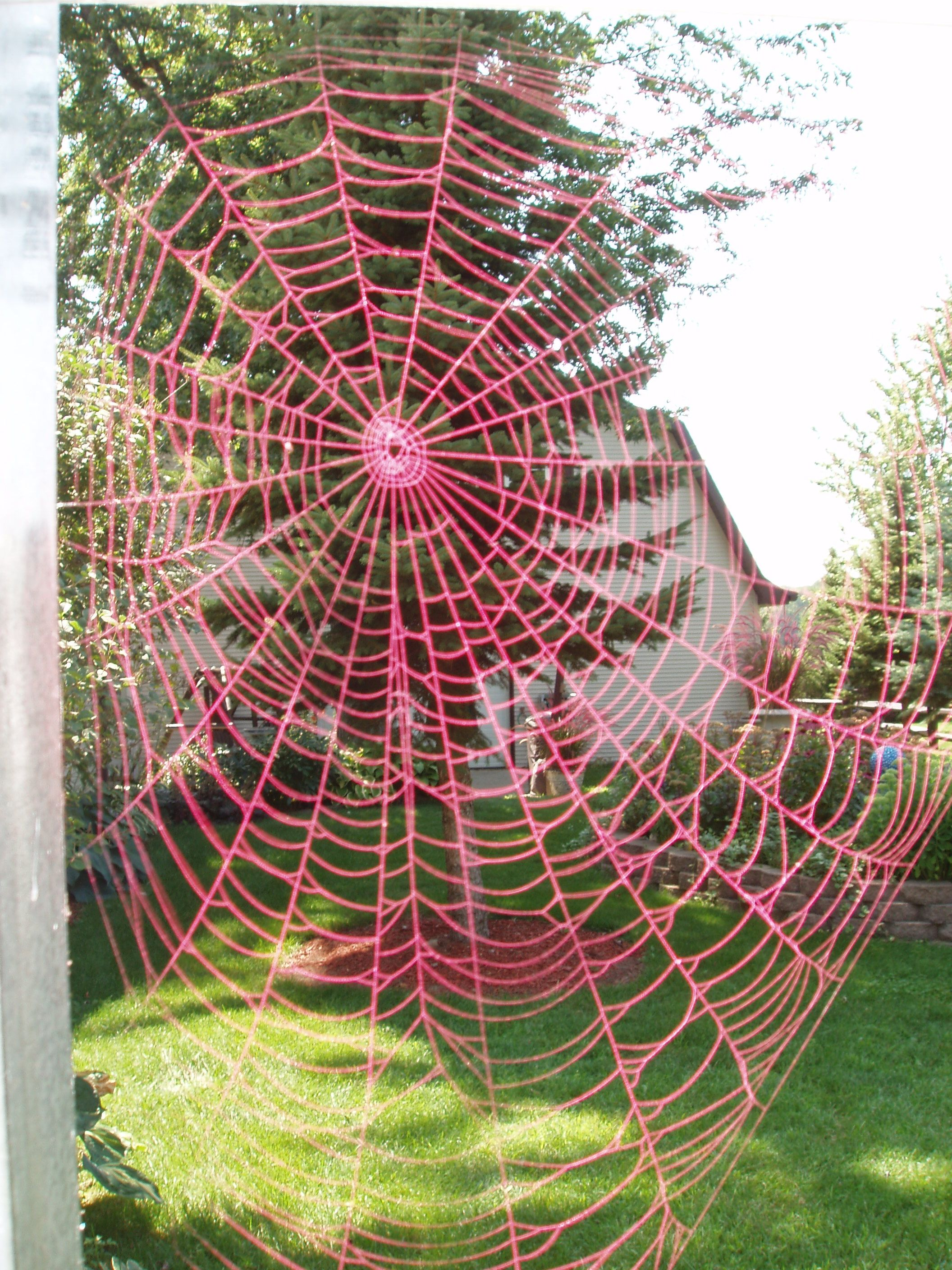 spray painted a spider web with bright paint