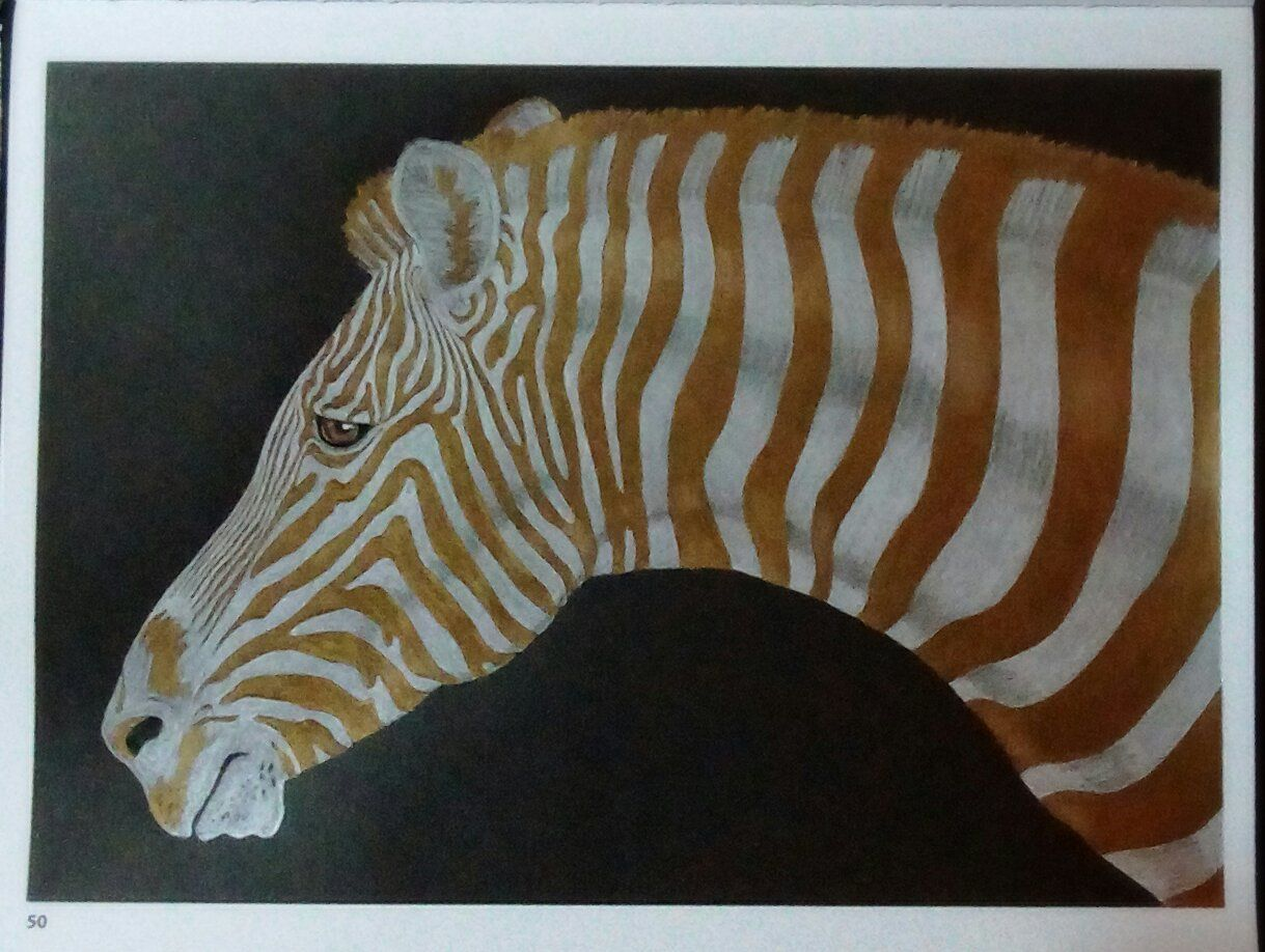 Coloring Pages For Zebra : Zebra burchelles by susan vavouyios intricate ink animals in