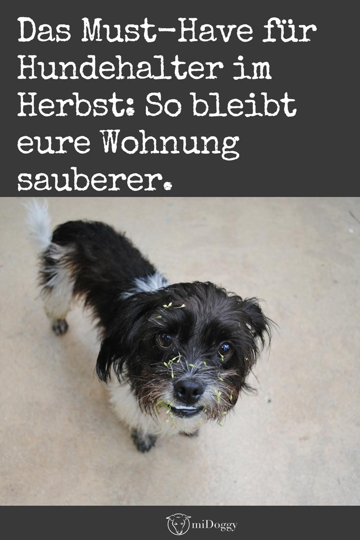 Nasser Hund In Auto Und Wohnung So Ist Es Kein Problem Mehr Hunde Hund Auto Und Pudel Welpen