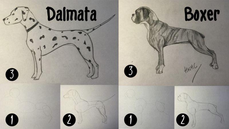 Pin De Olga En Grafisme I Dibuix Perros Boxer Como Dibujar Un Perro Perros