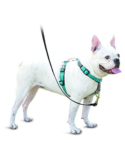 PetSafe 3in1 Harness, from the Makers of the Easy Walk Ha