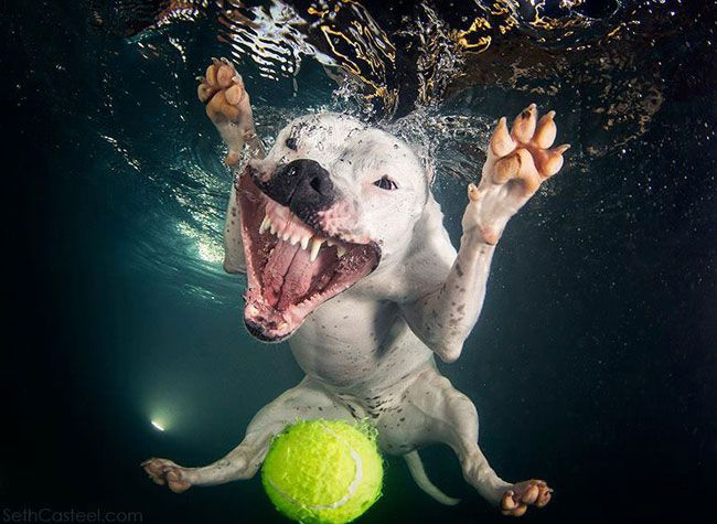 Amazing Shots Of Dogs Diving Under Water For Balls Underwater