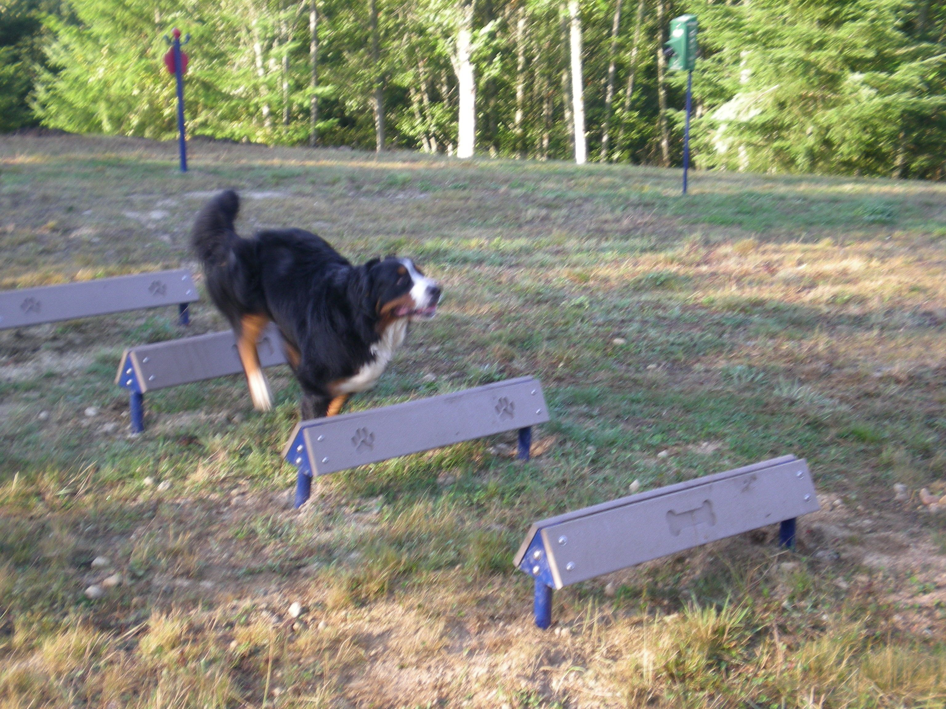 Hound Hurdles  With engraved bone and paw graphics for aided depth perception these are a fun way to spruce up your dog park or play area resort in the gardens
