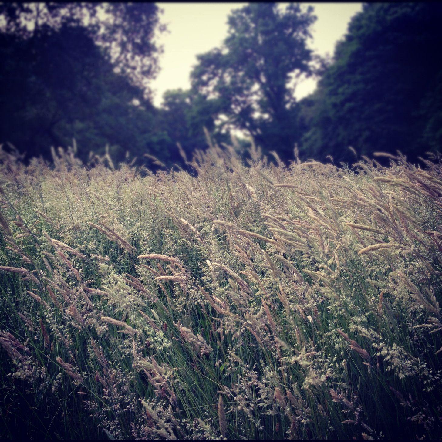 thick grass.