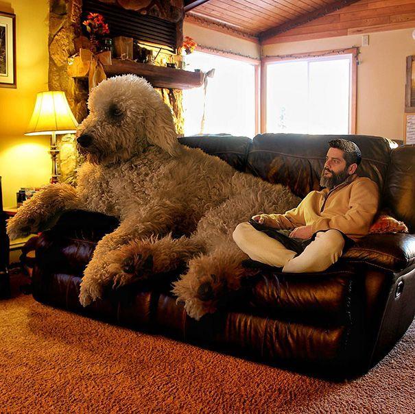 Сосу у своего пса фото 104-603