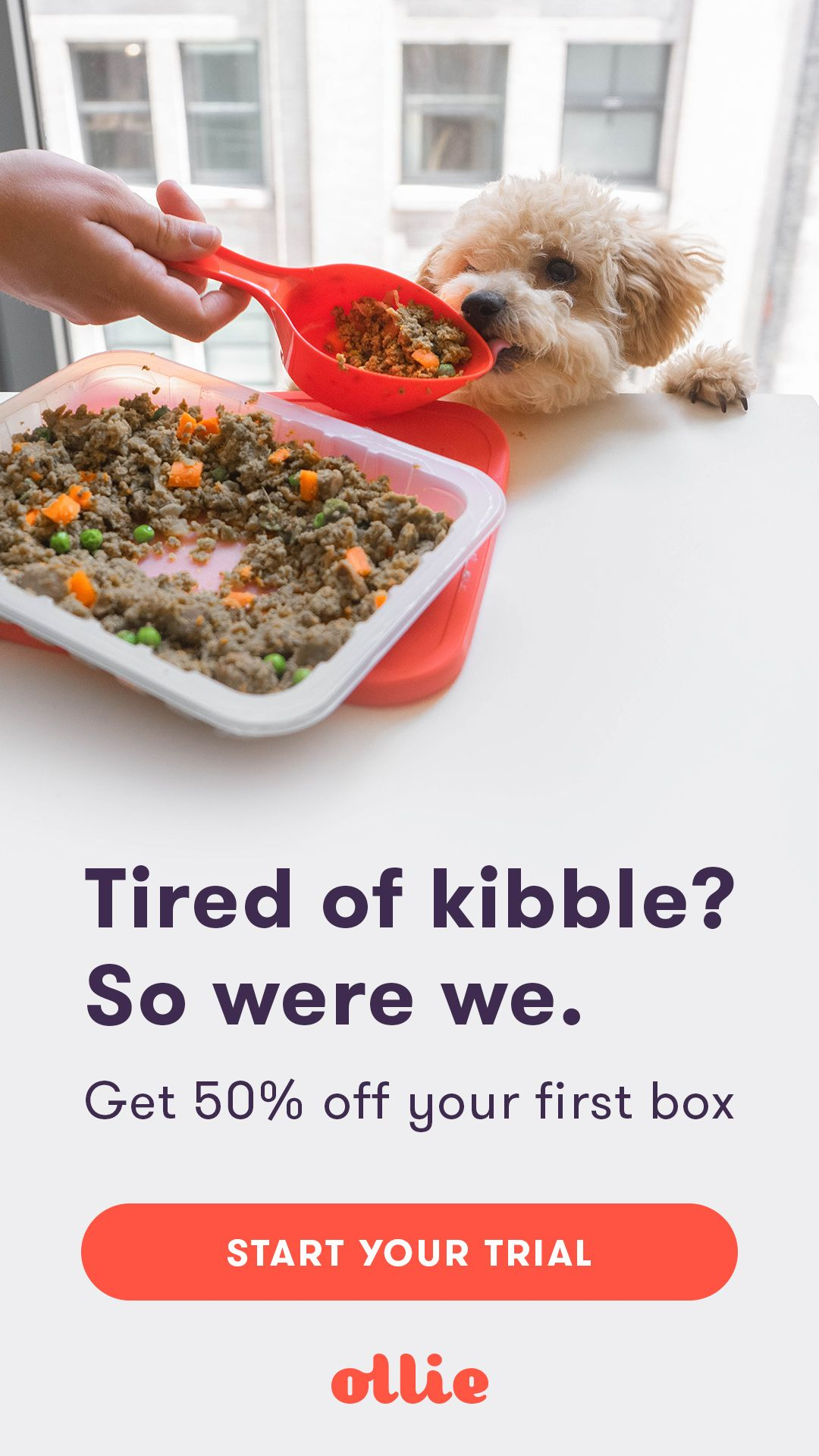 Meet Ollie Human Grade Dog Food Tailored To Your Dog S