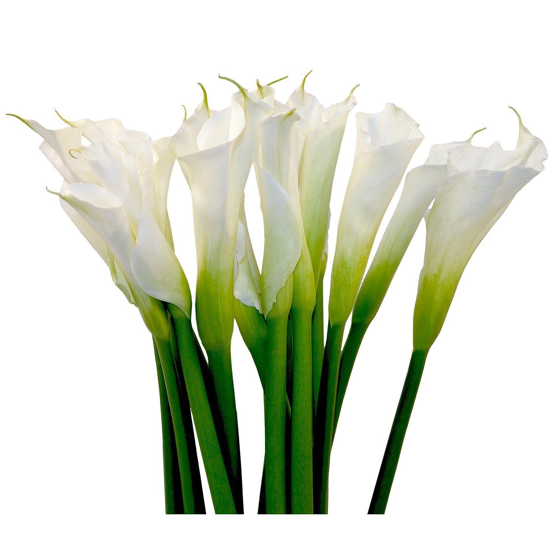 Sam S Club Wedding Flowers: Large Calla Lily