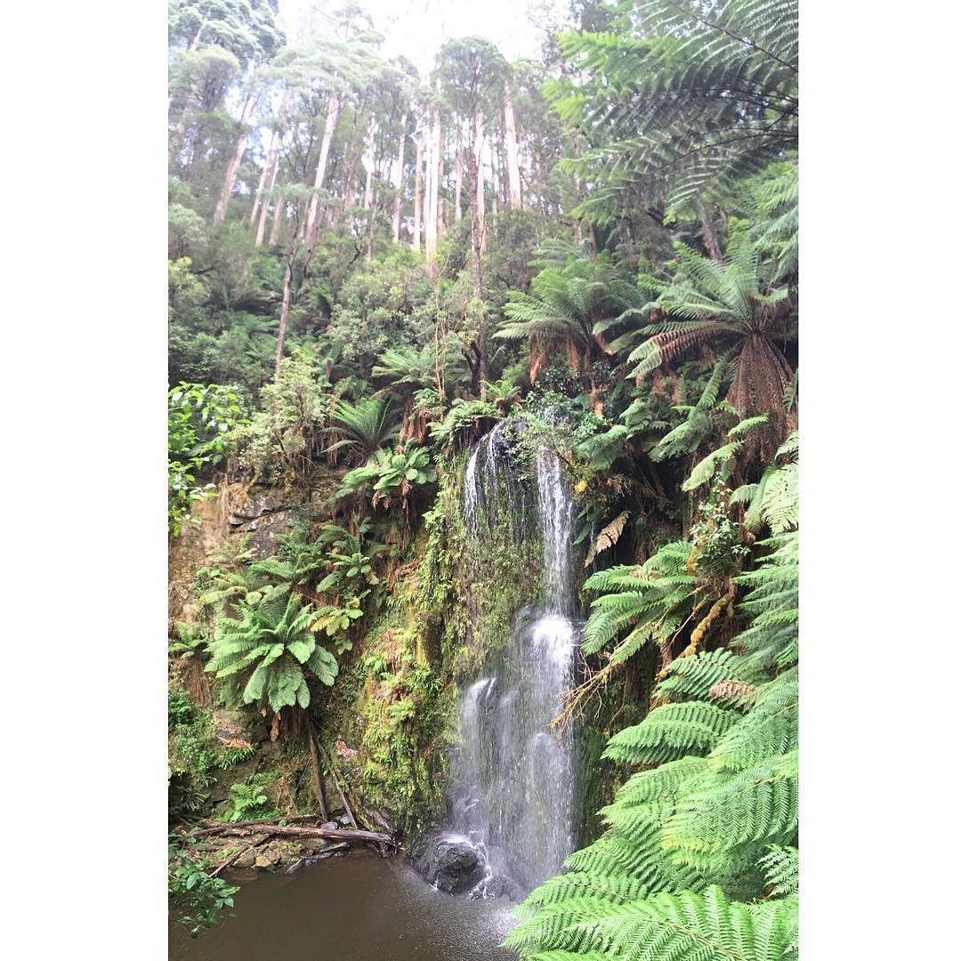 Un peu de fraîcheur aussi !  #waterfall #beechforest #forest #water #walk #green #chill #morning #greatoceanroad by oudeloune