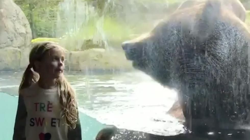 Girl Grizzly Share Sweet Moment Videos From The Weather Channel Weather Com Woodland Park Zoo Grizzly In This Moment