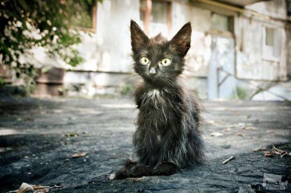 * Pourtant, un autre chat Kitty