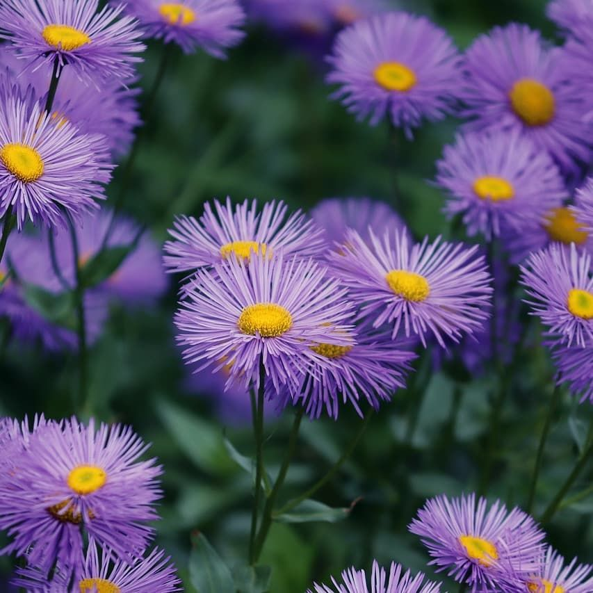 Jetzt Farbe In Den Garten Bringen Https Gartenbau Hammer De Gartenbau Garden Styles Inspiration Success Garten Garden Bad Gartenbau Garten Bau