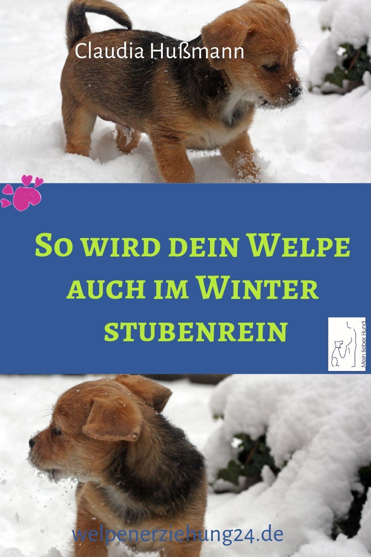 7 Einfache Regeln Fur Die Stubenreinheit Im Winter Welpenerziehung Welpen Hunde Welpen Erziehung Welpenerziehung