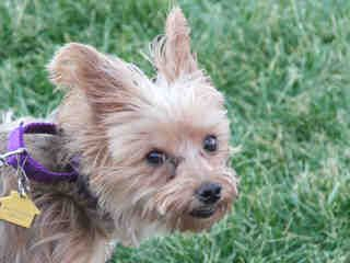 The Humane Society of Missouri's St. Louis area adoption