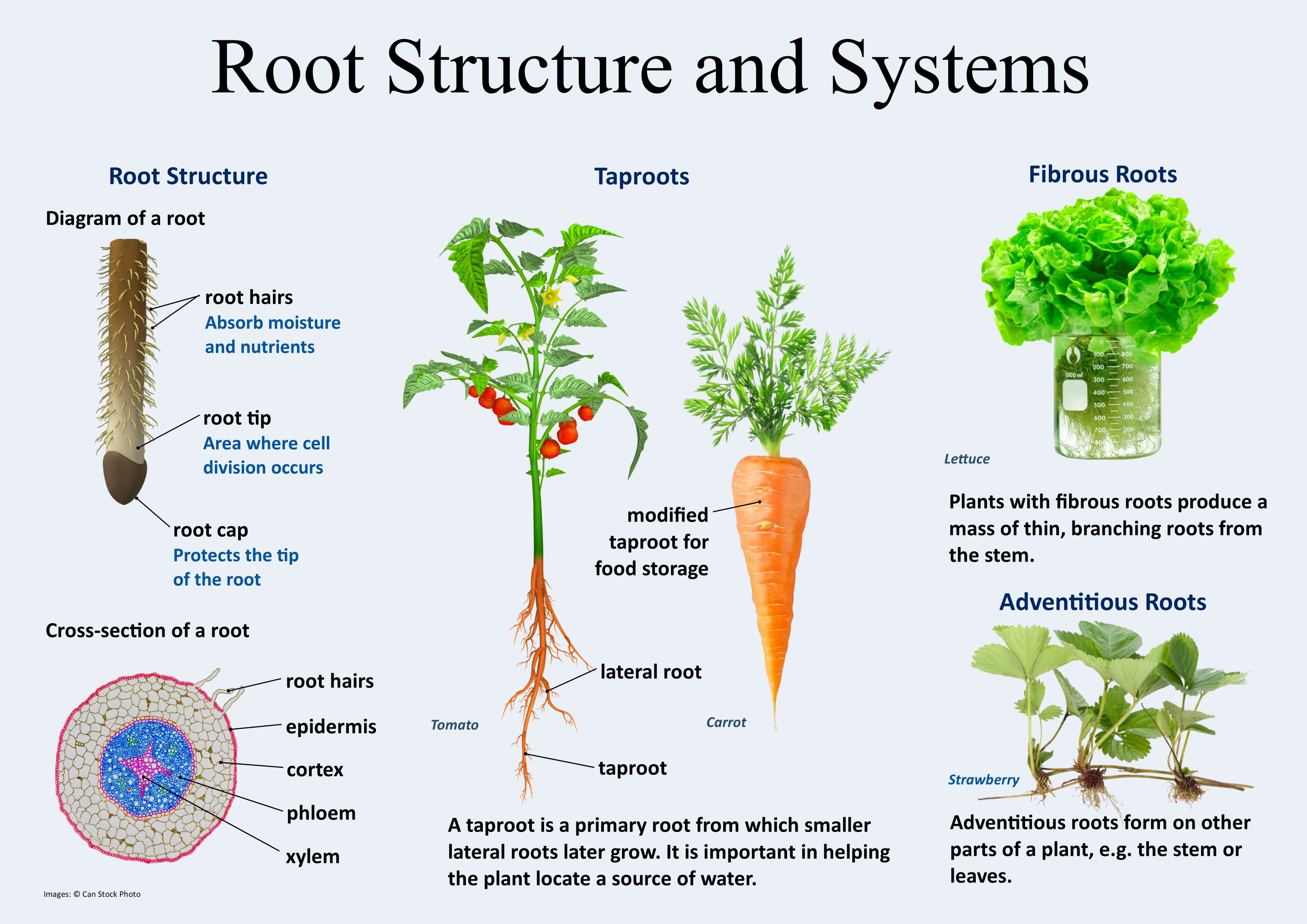 Root Structures And Systems Plant Structure Root Structure Plants Worksheets
