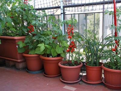 Warzywa W Doniczkach Uprawa Jakie I Kiedy Sadzic Urban Gardening Balcony Vertical Garden Plants Urban Garden
