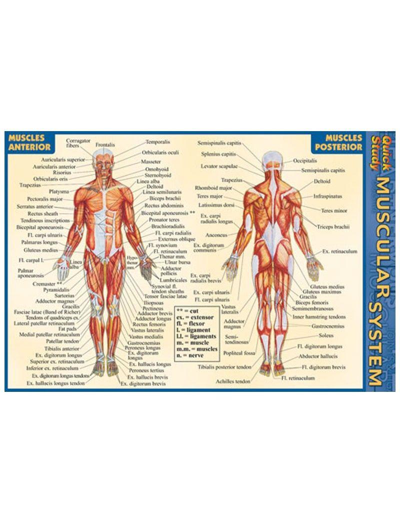 Nett Menschliche Anatomie Bücher Free Download Pdf Bilder ...