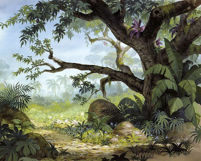 Jungle Background Jungle Art Disney Background Jungle Drawing