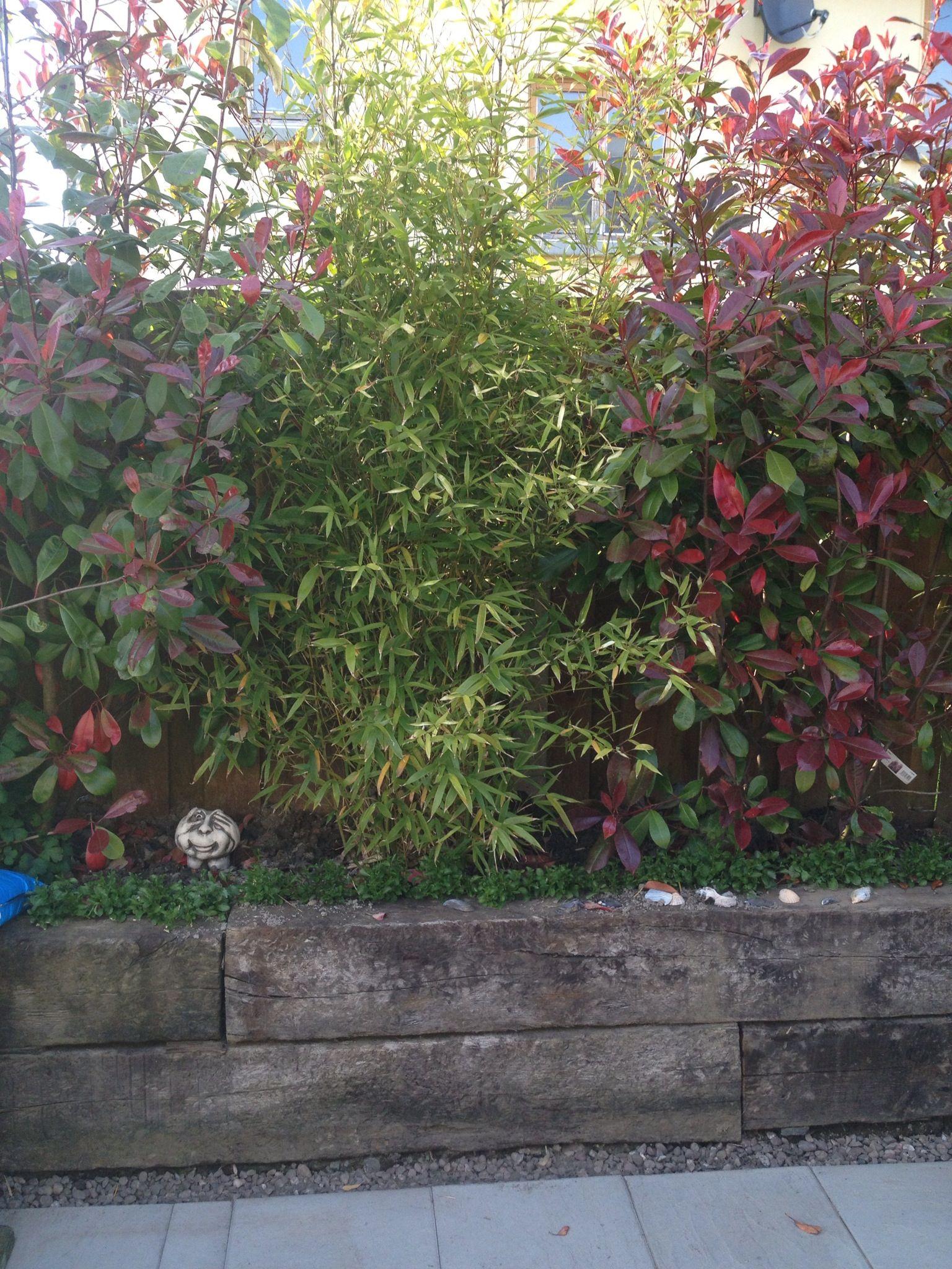 bamboo backyard plans pinterest backyard and gardens