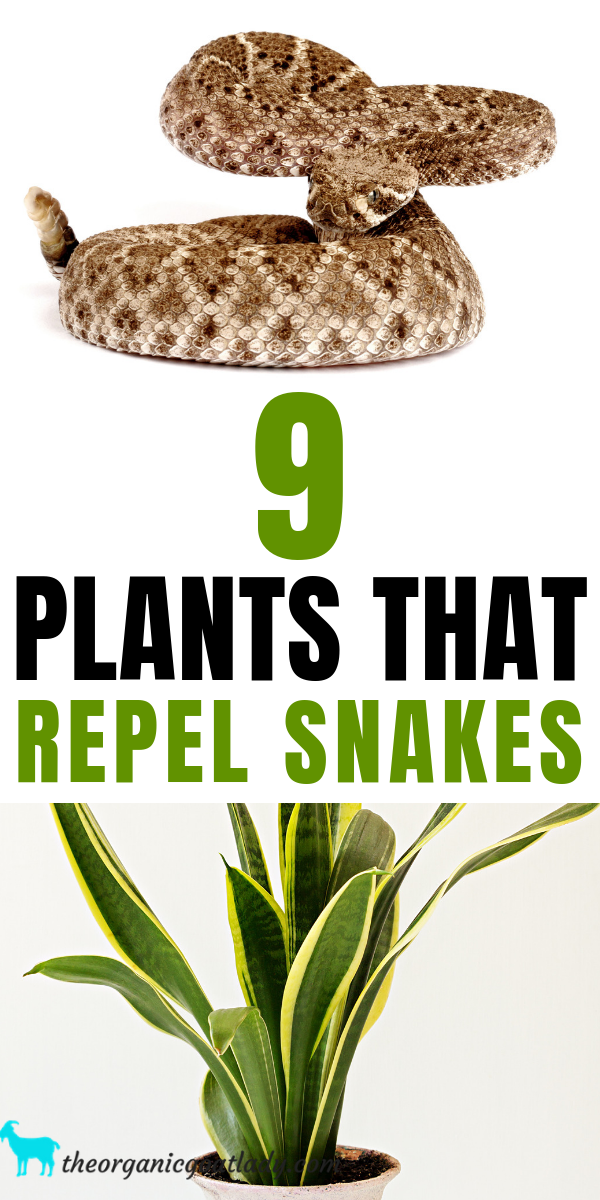 9 Plants That Repel Snakes #outdoorgardens