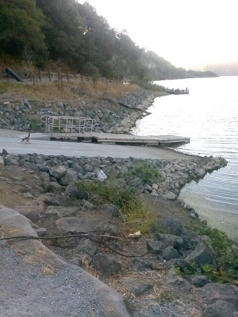 Lake Chabot San Leandro, CA | Bay Area trout and bass