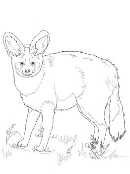 Bat Eared Fox Bat Eared Fox Fox Coloring Page