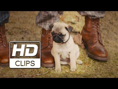 Pug Puppy Will Steal Your Heart In Clip From Kingsman The Secret