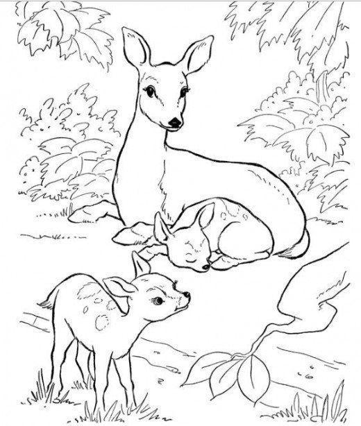 ausmalbilder zum ausdrucken reh  coloring ideas for kids