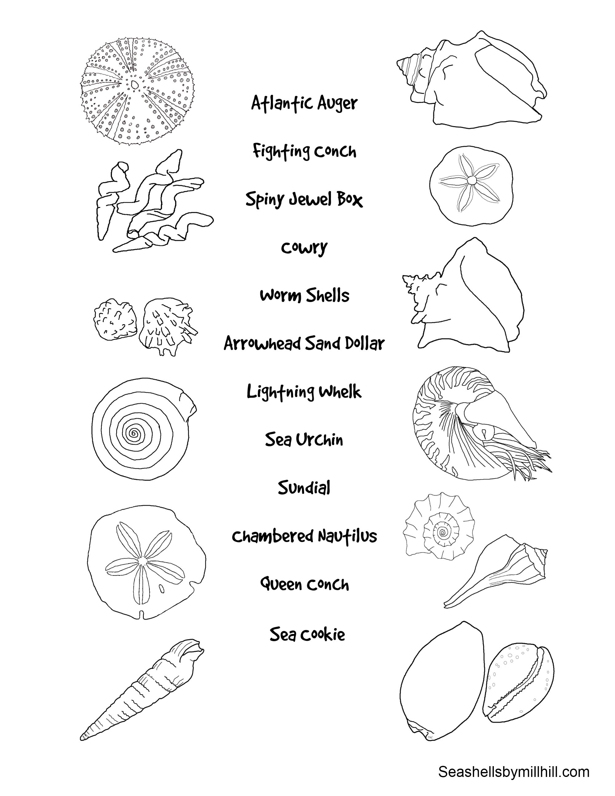 seashell matching page for kids  Quest Club  Pinterest  Nature
