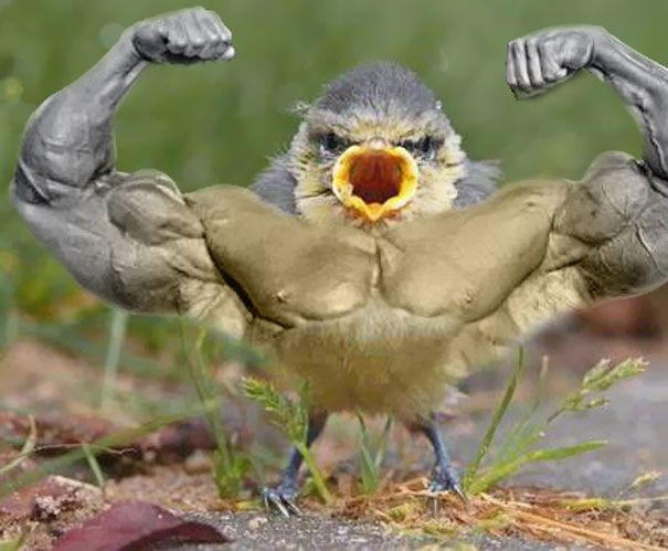What Would Birds Do If They Had Arms Bored Panda Photoshopped Animals Birds Animals