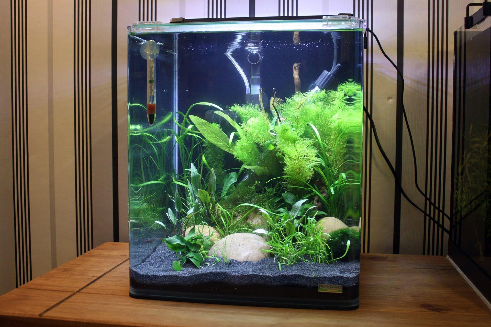 Dennerle Nano Cube Shrimp Tank 30 Litres Aquascape Shrimp Tank Aquarium