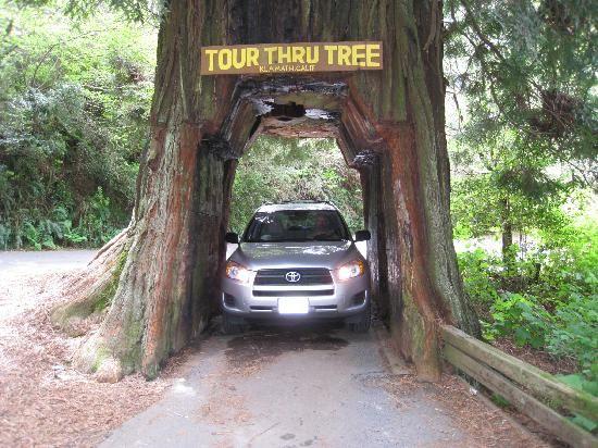Tour Through Tree Oregon Coast Camping Klamath National Parks
