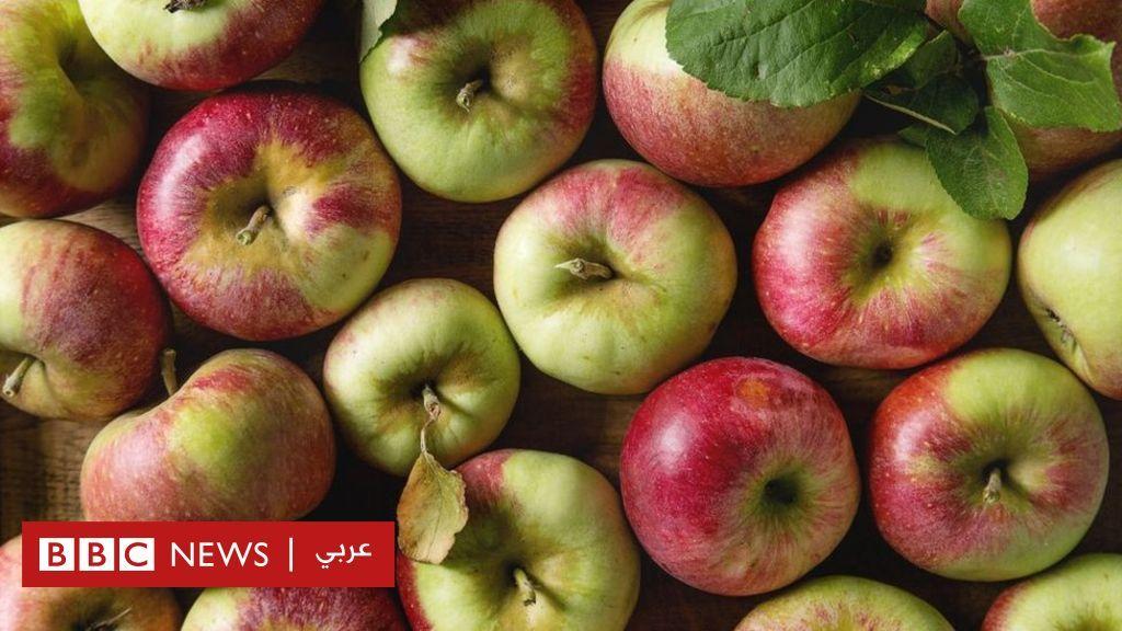 هل سيختفي التفاح الأحمر قريبا من الأسواق بسبب التغير المناخي Bbc Arabic Apple Food Backgrounds Red Apple