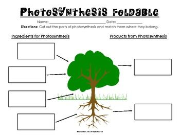 photosynthesis worksheet pdf free worksheets library download and print worksheets free on. Black Bedroom Furniture Sets. Home Design Ideas