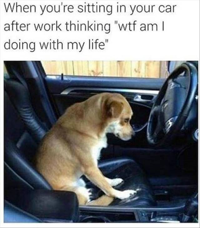 WHEN YOU'RE SITTING IN YOUR CAR AFTER WORK THINKING - Google Search