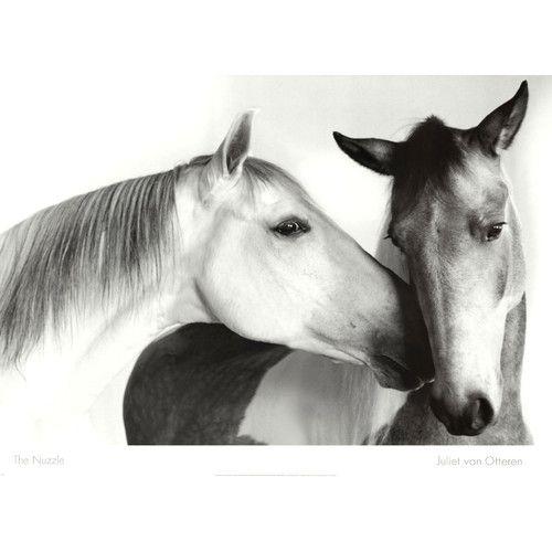Nuzzle By Van Otteren Photographic Print In 2021 Horse Art Horses Horse Art Print