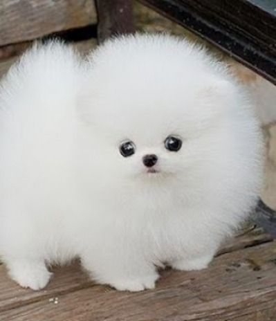 The 33 Fluffiest Animals On The Planet Animals Aka Cuteness