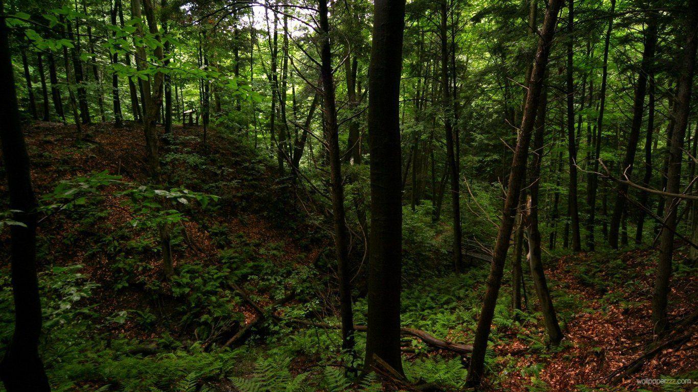 Dark Forest Dark Green Forest Wallpaper Dark Green Forest