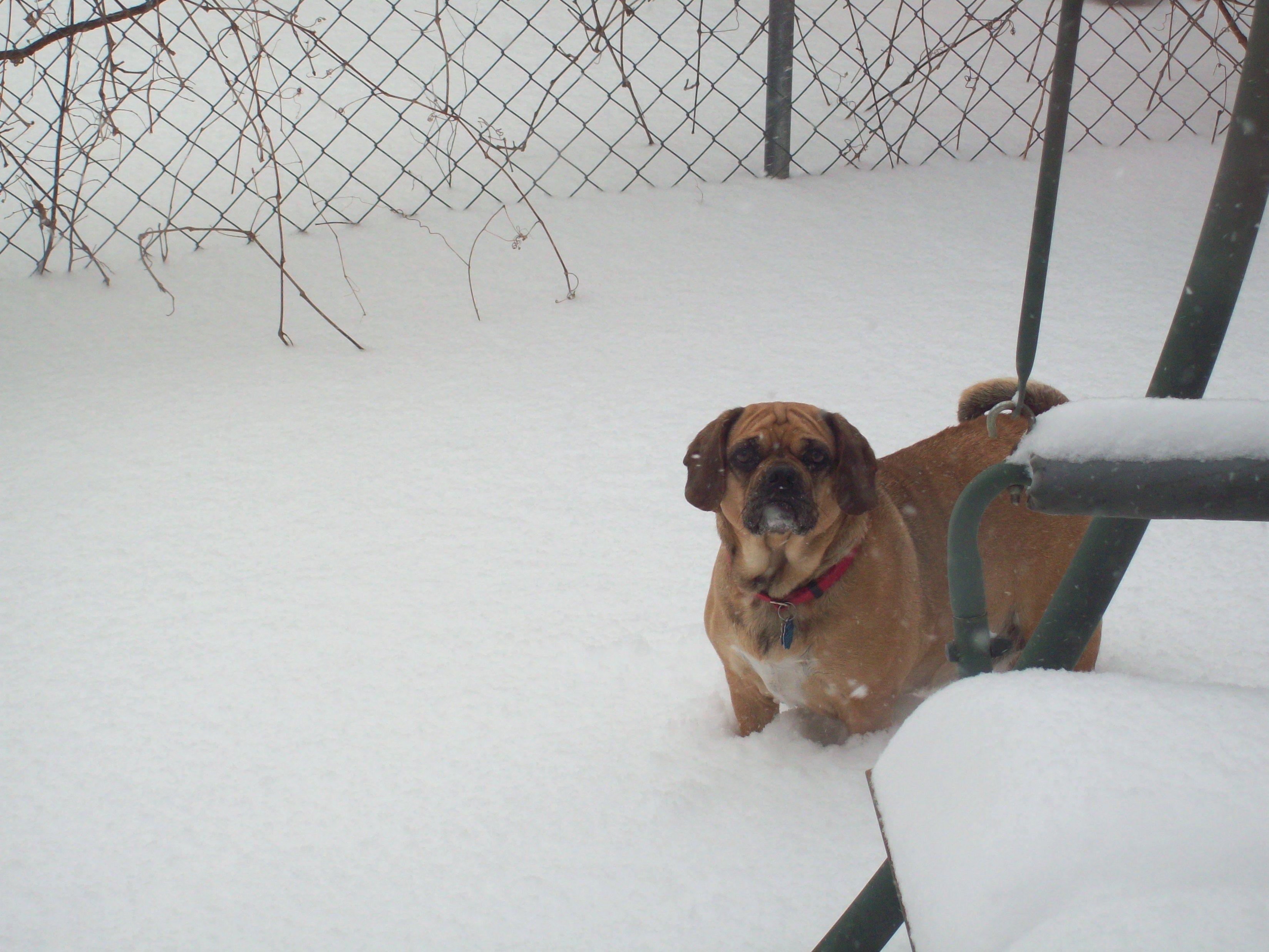 Remember SNOW?