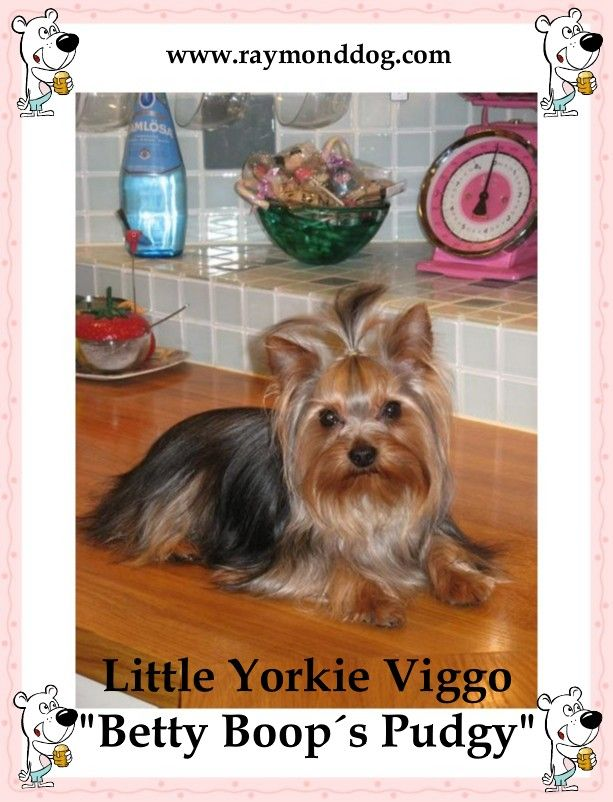Pin by Shirley on Dogs life Yorkie, Yorkshire