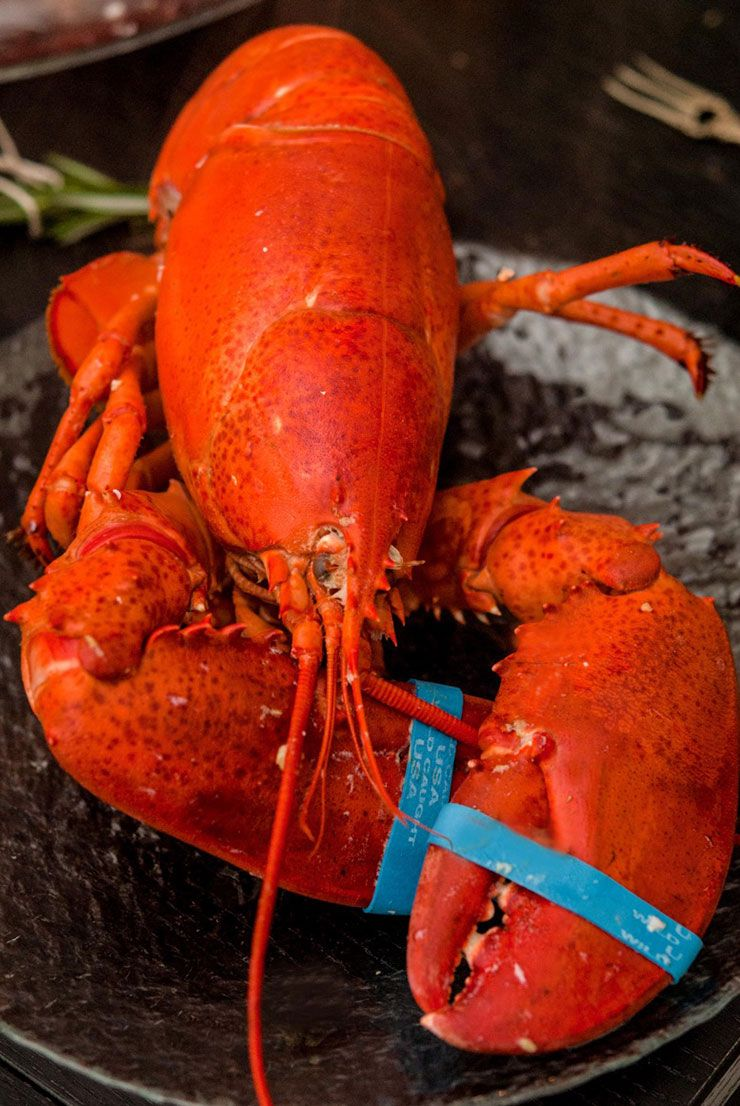 Perfectly Boiled Lobsters | Recipe | Lobster party ...