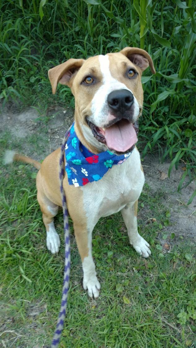 Adopt Barney on Treeing walker coonhound, Walker