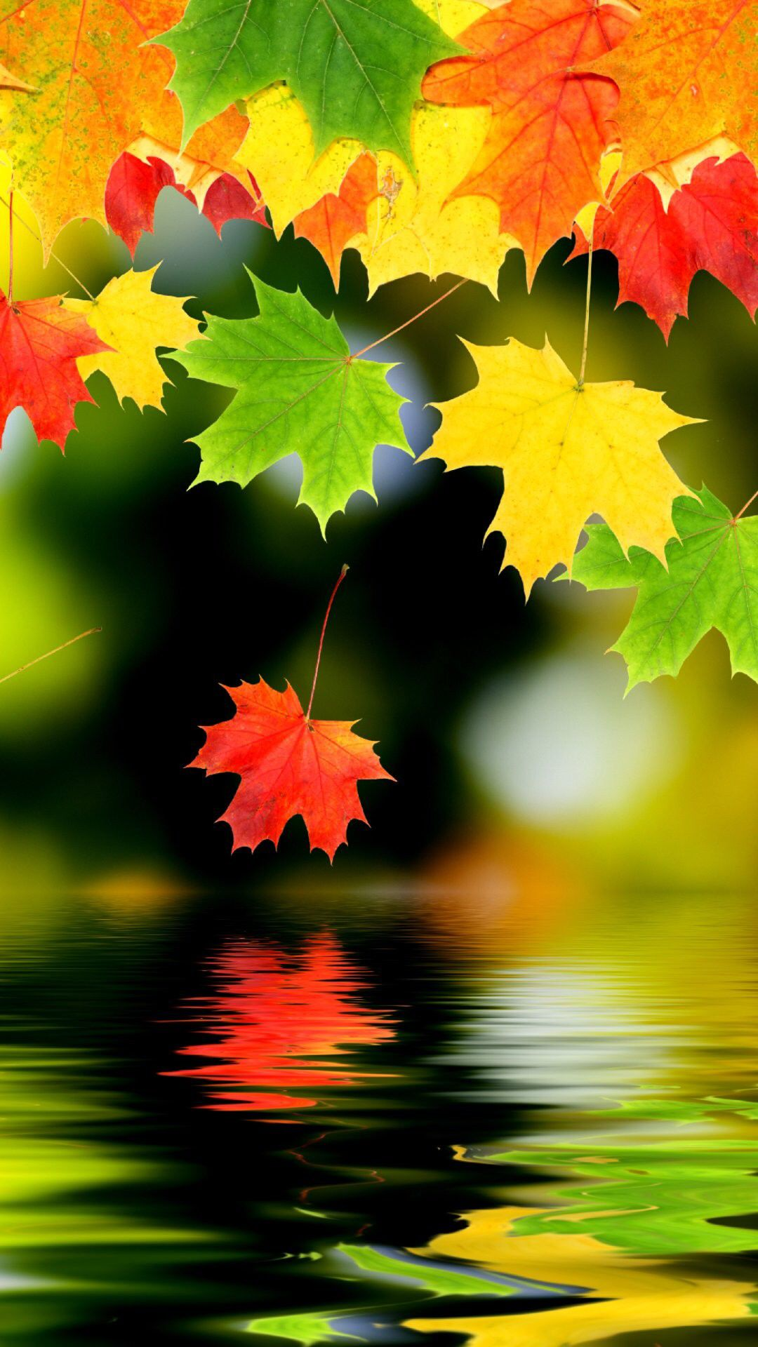 Image From Http Fashion Qkiz Com Uploads 1409 17 Au Autumn iphone 6 plus wallpaper nature iphone 6 plus アートフォト 紅葉 景色 水彩画のアート
